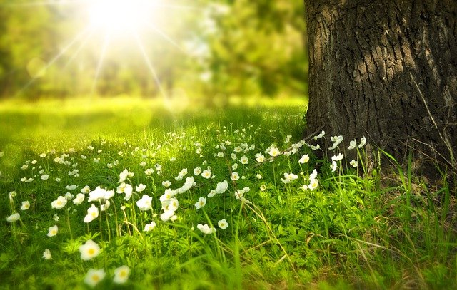 Tree, Flowers, Meadow, Tree Trunk, Sunlight, Summer