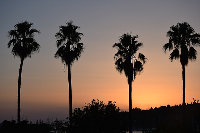Sunset, Palms, Summer, Croatia, Hvar, Sea, Tourism