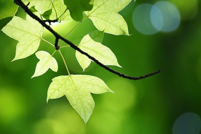 Summer, Taipei, Botanical Garden, Tree Leaf, Sunshine