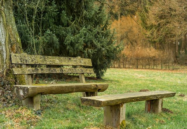 Bank, Wood, Nature, Tree, Grass, Park, Summer, Woods