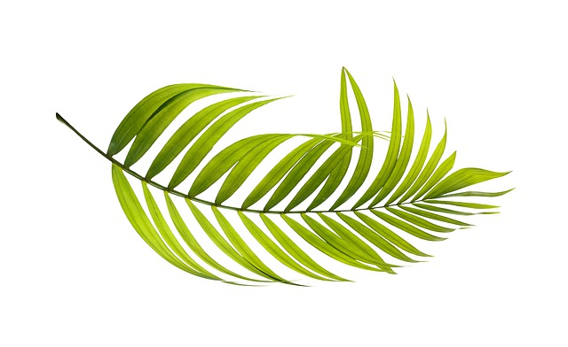 Palm, Leaf, Green, Botany, Tropical, Plant, Summer