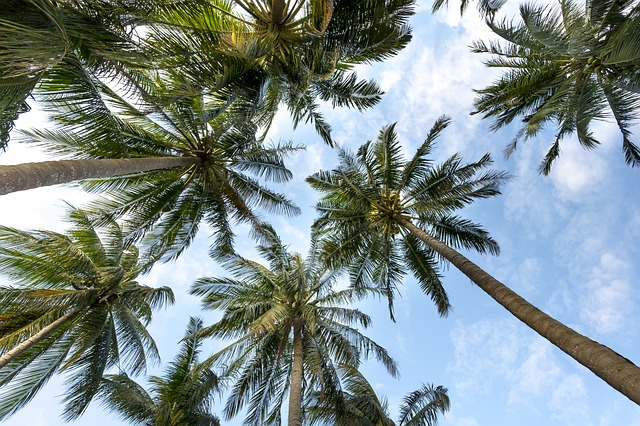 Palm Trees, Sky, Palms, Background, Summer, Tropical