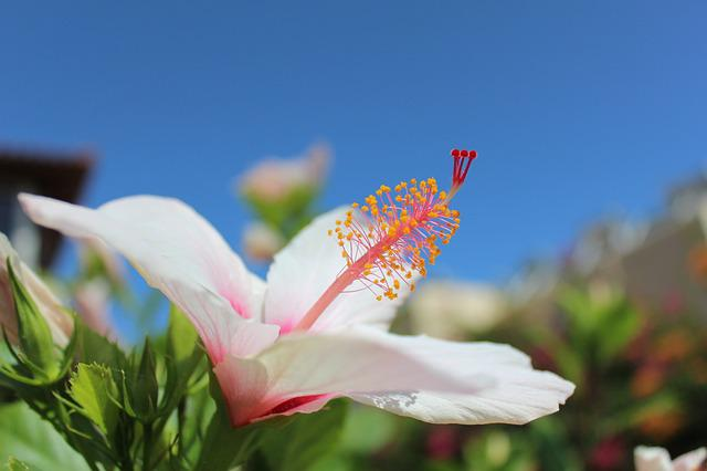 Crete, Summer, Greece, Nature, Island, Vacation, Flower