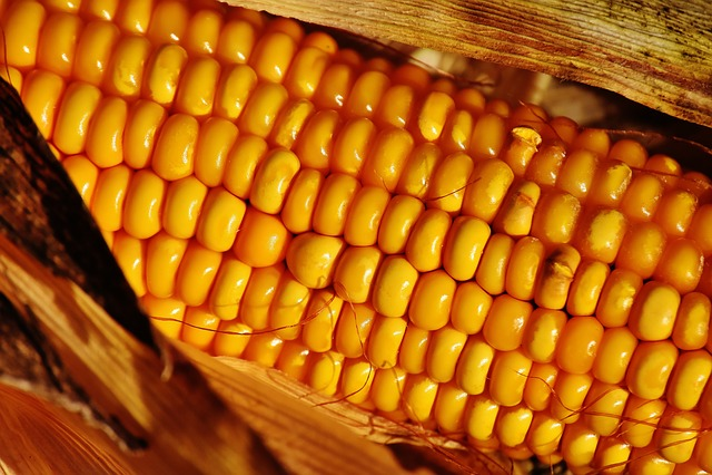 Corn, Vegetables, Food, Corn On The Cob, Plant, Summer