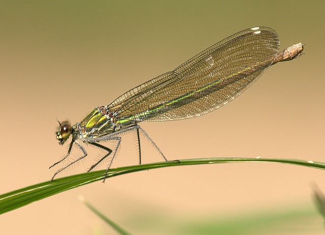 Dragonfly, Shiny, Insect, Eyes, Animal, Wing, Summer