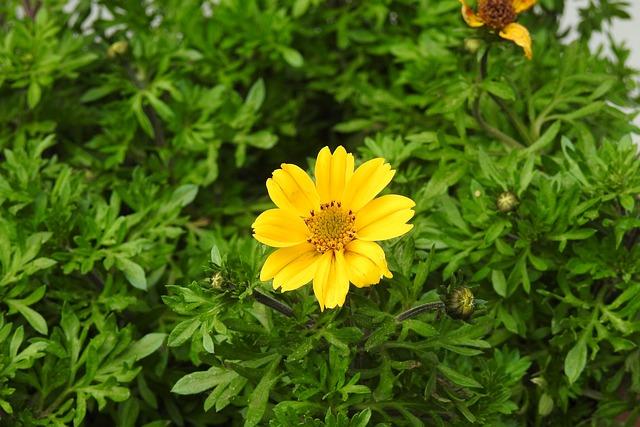 Nature, Plant, Summer, Leaf, Flower, Yellow Flower
