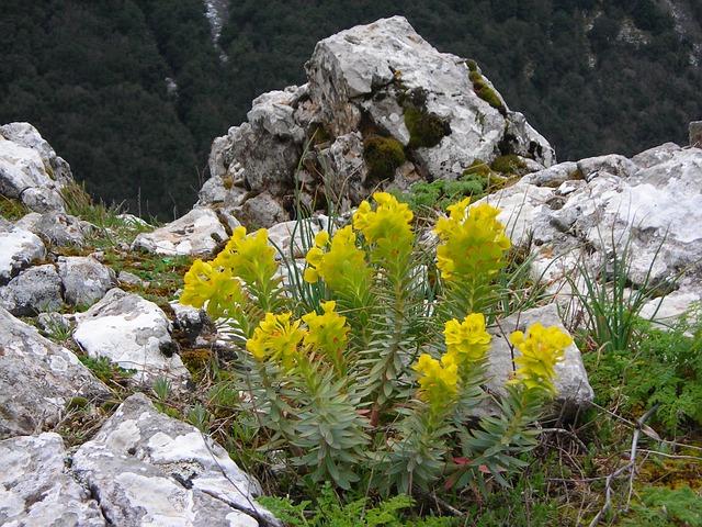 Etna, Summit, Plant, Flowers, Yellow, Italy, Sicily