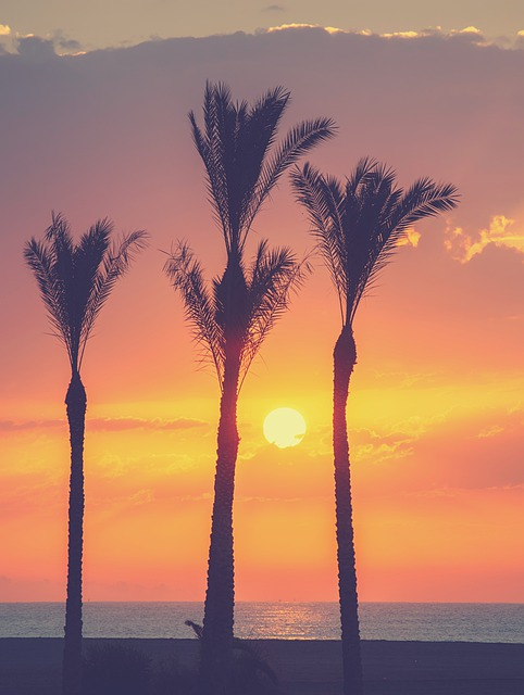 Landscape, Dawn, Palms, Sea, Sun, Clouds, Sky, Beach