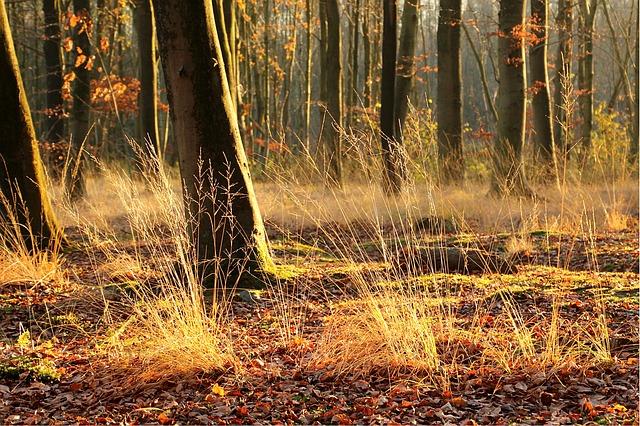 Sun, Forest Night, Light, Autumn, Wind