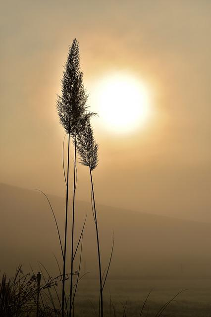 Grass, Back Light, Fog, Grasses, Nature, Sun, Closeups