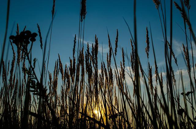 Nature, Outdoors, Reed, Grass, Growth, Sun, Rural