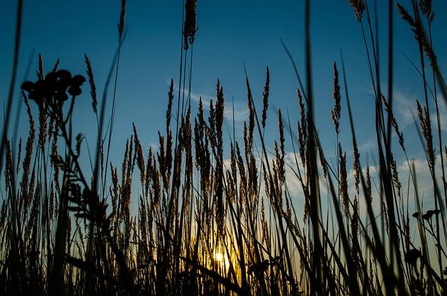 Nature, Outdoors, Reed, Grass, Growth, Sun, Rural