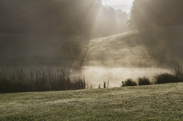 Fog, Park, Sun, Water, Landscape, Cold, Sunbeam, Hill