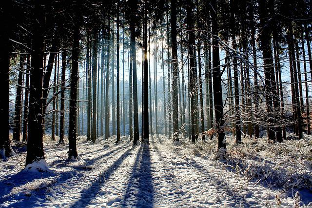 Wood, Nature, Landscape, Light, Sun, Winter, Panorama