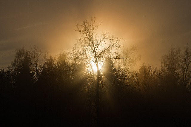 Sunset, Trees, Mist, Silhouette, Sun, Nature, Evening
