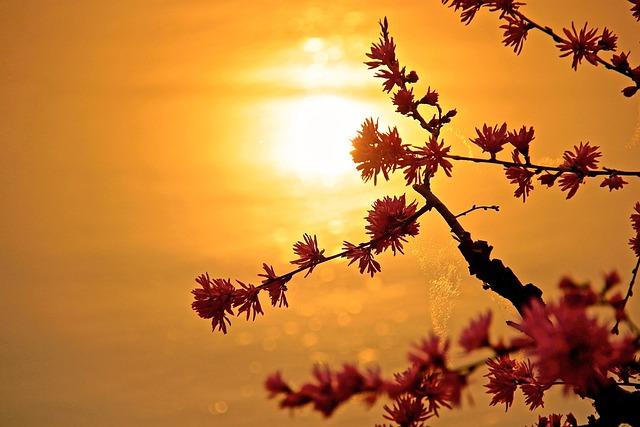 Sun, Sunset, Nature, Beauty, Flower, Water, Park