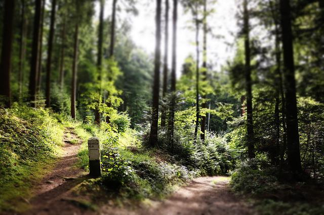 Forest, Pathway, Sun, Trees