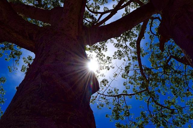 Sun, Tree, Sunlight, Sky, Outdoors, Sun Rays