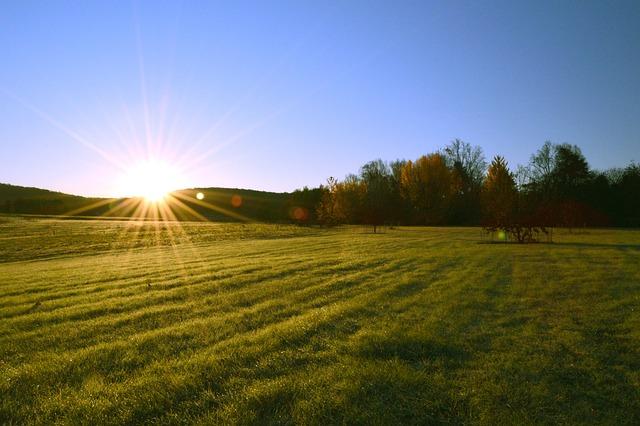 Sunrise, Field, Tree, Fall, Sun, Landscape, Rural