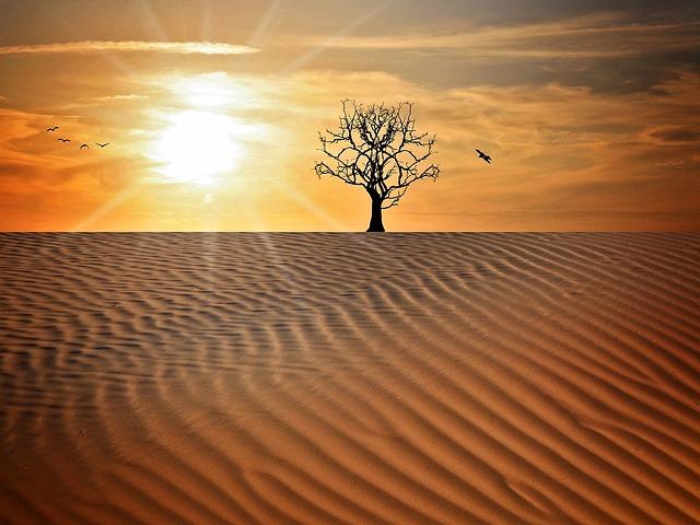 Landscape, Sand, Drought, Tree, Sky, Sun, Sunset