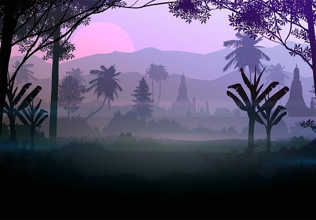 Forest, Trees, Fog, Silhouette, Mist, Sun, Sunlight