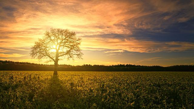 Sunset, Tree, Field, Sun, Dawn, Panorama, Back Light