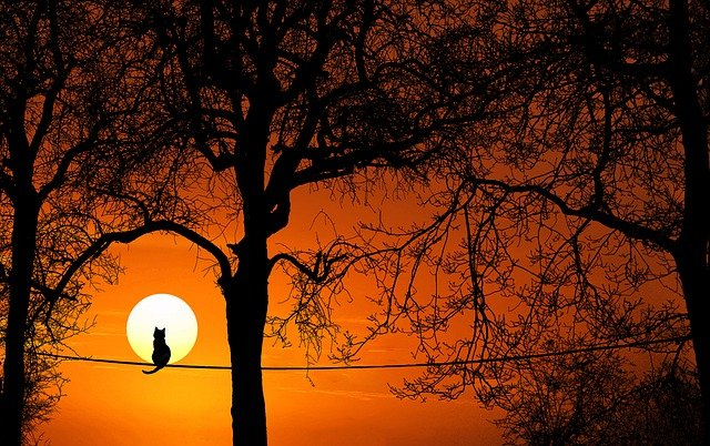 Tree, Cat, Silhouette, Sunset, Dawn, Dusk, Nature, Sun