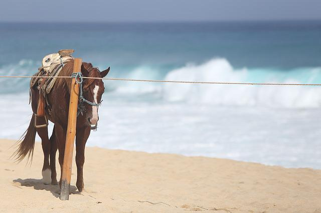 Horse, Beach, Cabo, Landscape, Vacation, Sun, Waves