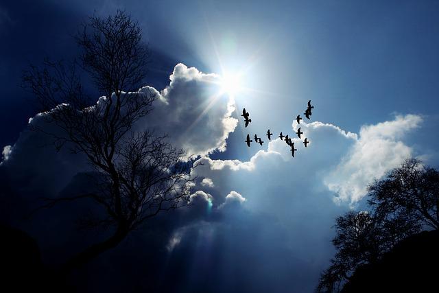 Sun, Sunlight, Winter, Sky, Clouds, Nature, Sunbeam