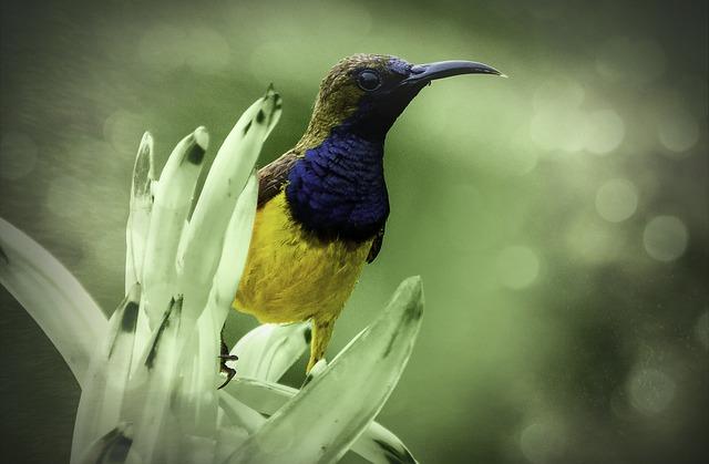 Bird, Sunbird, Yellow-bellied Sunbird, Green, Grass