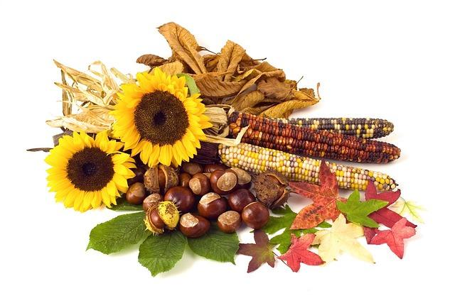 Sunflower, Sunflowers, Conker, Conkers, Corn, Leaf