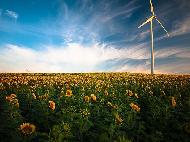 Sunflowers, Windmill, Field, Farm, Sunflower Farm