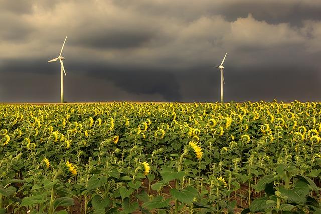 Sunflower, Field, Sunflower Field, Summer, Thunderstorm