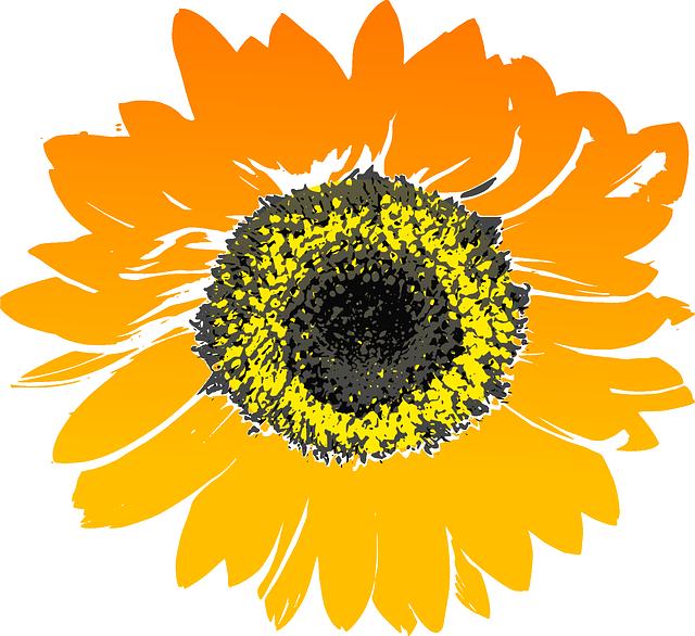 Sunflower, Flower, Yellow, Orange