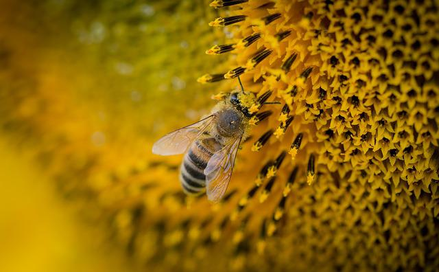 Bee, Macro, Nature, Sunflower