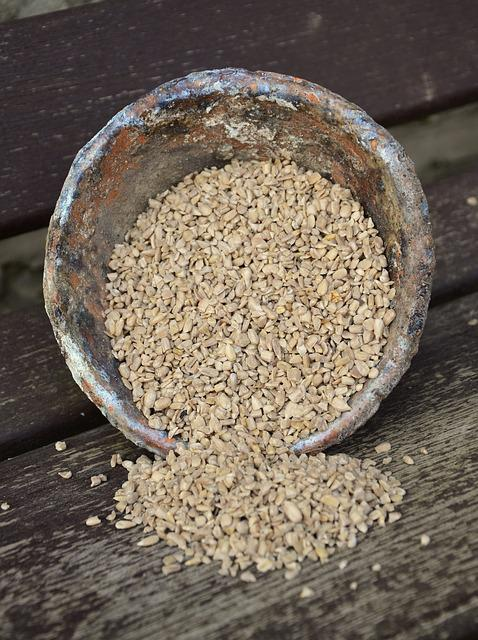 Hulled Sunflower Seeds, Sunflower Seeds, Cores