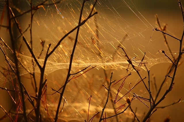 Cobweb, Aesthetic, Nature, Sunlight, Spun Yarn, Road