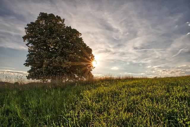 Tree, Landscape, Green, Rays, Sunlight