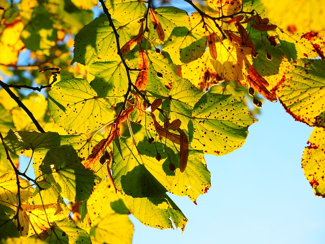 Leaves, Autumn, Sunny, Colorful, Fall Color