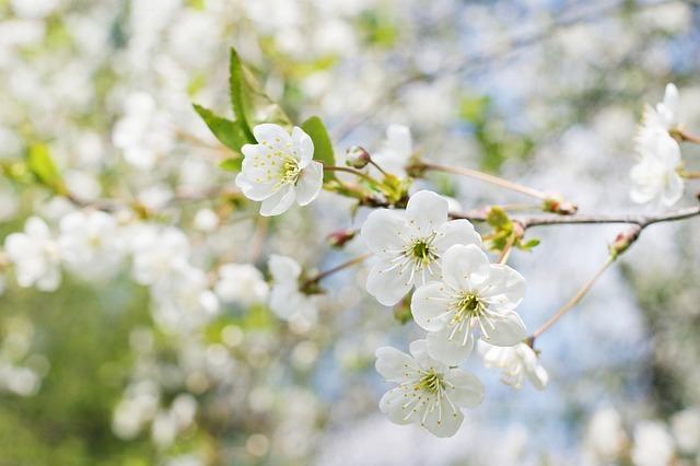Spring, Tree, Sunny, Nature, Foliage, Sprig, Green