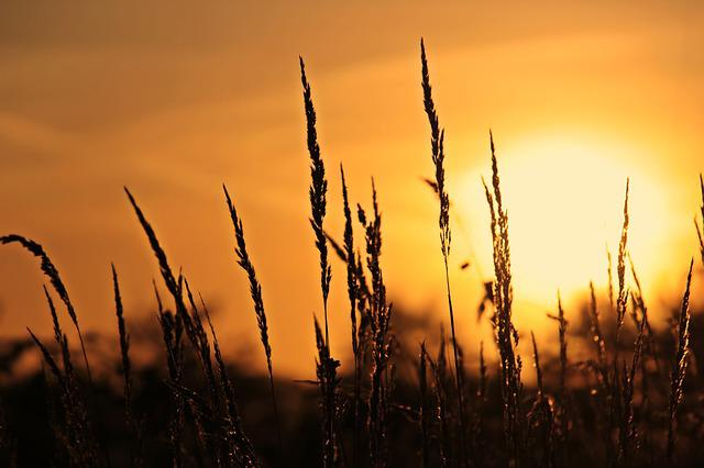 Sunrise, Grasses, Nature, Sky, Twilight, Backlighting