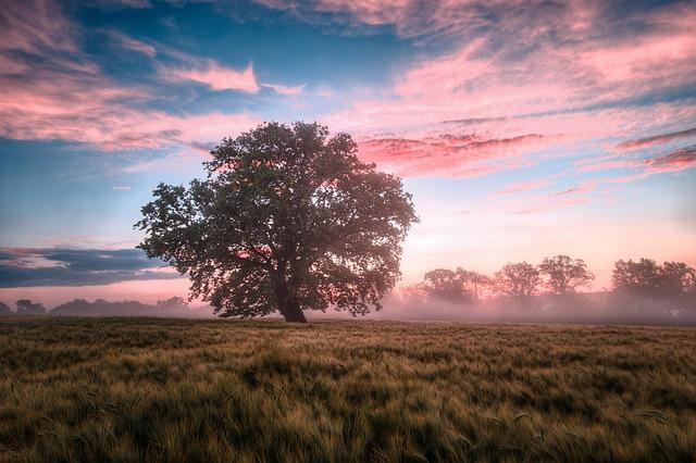 Field, Morning, Sunrise, Dawn, Nature, Landscape, Sky