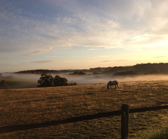 Hage, Sunrise, Horse, Field, Nature, Mist, Forest