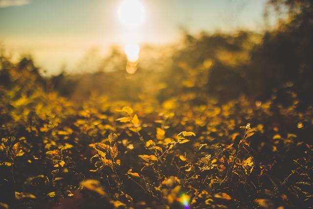 Grass, Plant, Sunrise, Sunset