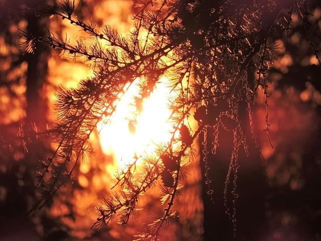 Sunrise, Roppen, Tyrol, Tree, Aesthetic, Sun, Sunshine