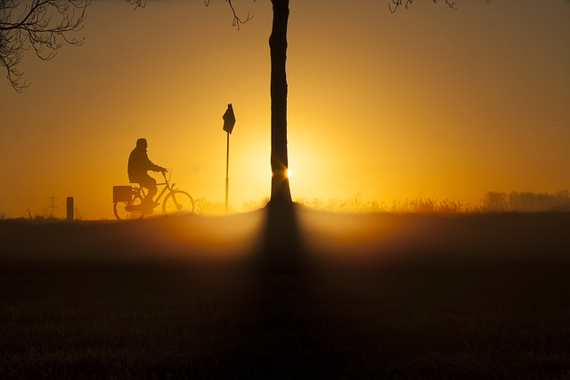 Sunrise, Bicycle, Winter, Tree