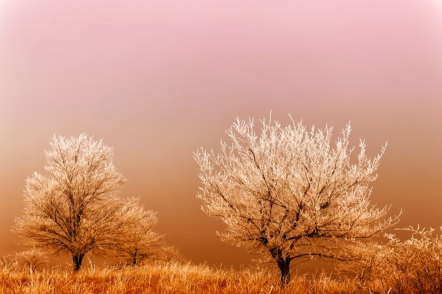 Winter, Sunrise, Dawn, Frost, Hoarfrost, Fog, Haze