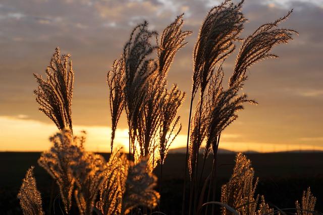 Grass, Sunset, Nature, Sun, Afterglow, Abendstimmung