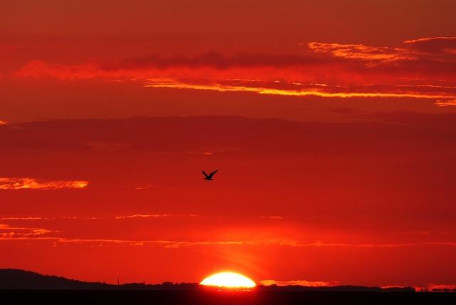 Glowing, Backlighting, Bird, Seagull, Sunset