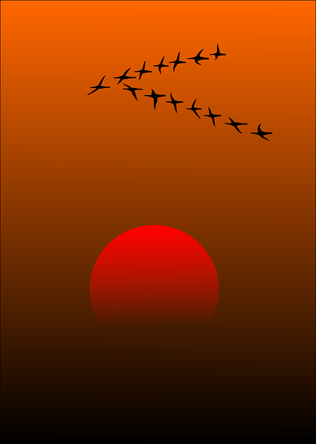 Migratory Birds, Birds, Sunset, Sun, Beautiful, Idyll